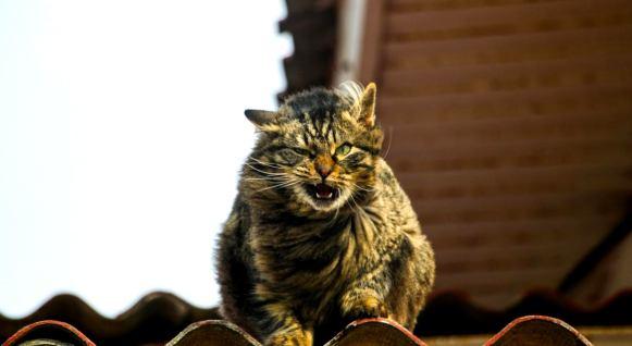 Почему коты так реагируют на пение человека: ответ - вопрос