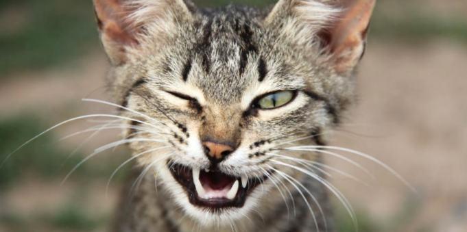 Пойми меня: как кошки говорят с нами