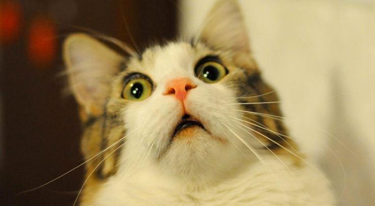 Другая реальность: самые необычные законы о кошках