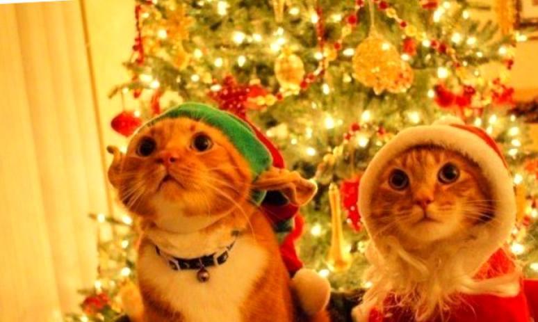 Коварный убийца или кошка наглоталась новогодней мишуры