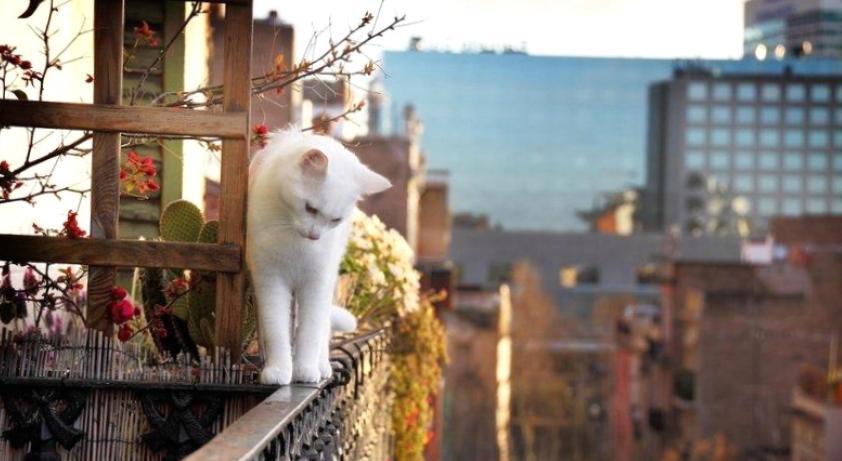 Шаг в бездну: кошка упала с огромной высоты и осталась жива