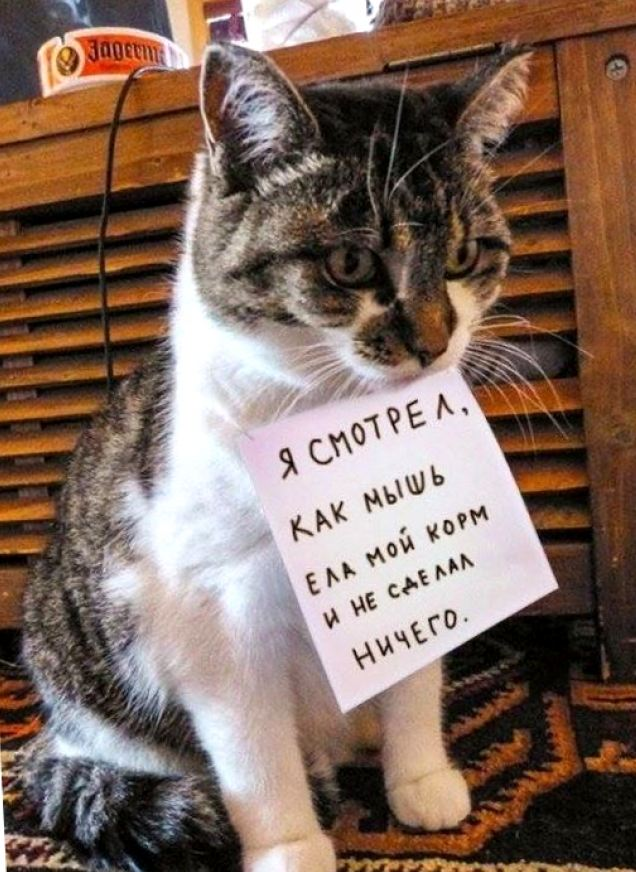 Мышки-кошки: почему кот боится мышей?