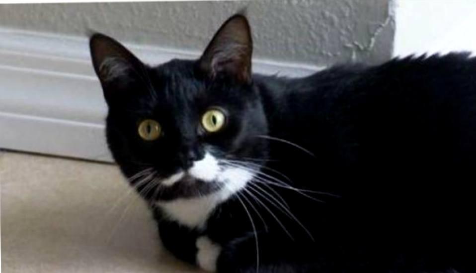 На волосок от смерти: как кошки спасают человеческие жизни