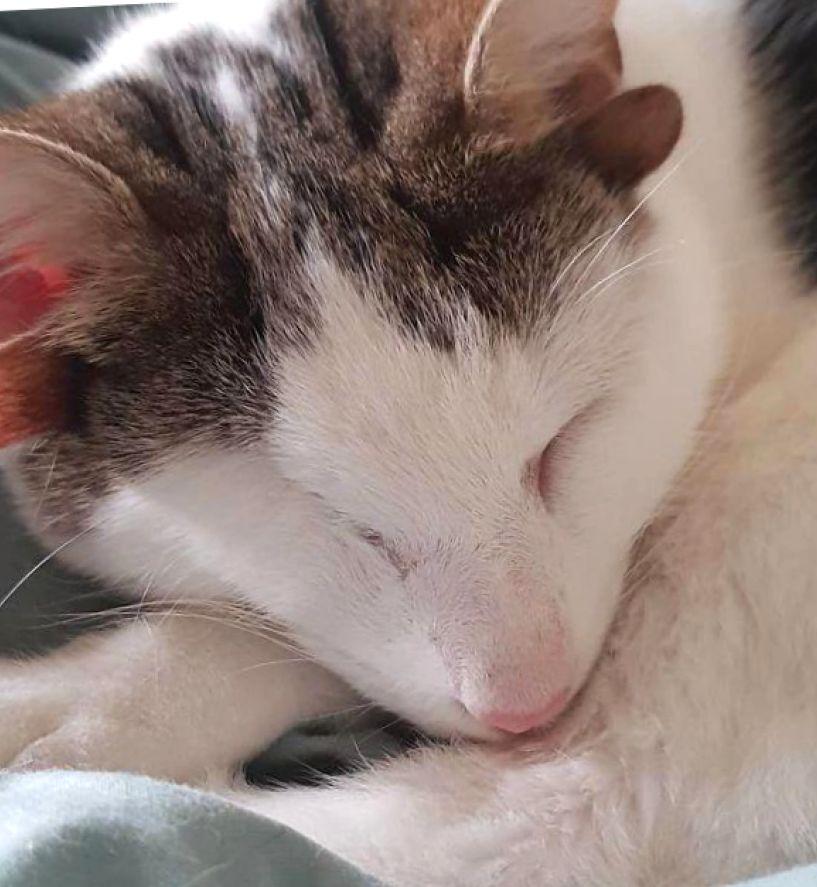 Четыре уха один глаз или история одного необыкновенного кота