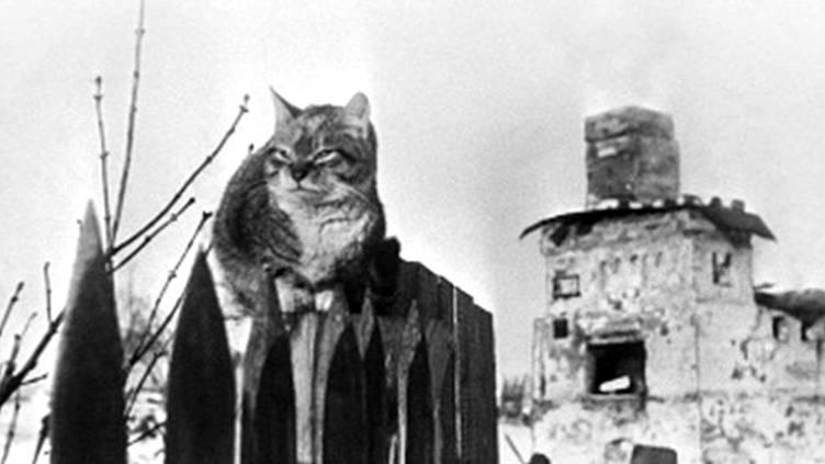 Кошки блокадного Ленинграда: и в смерти той невидимый подвиг