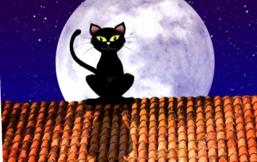 На недосягаемой высоте: почему кошки так любят сидеть на крыше?