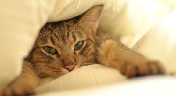 История одного похищения или как кошка новую хозяйку выбрала