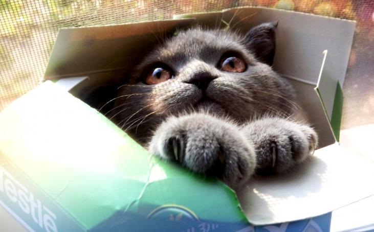 Рай для усатого интроверта или почему кошки так любят коробки