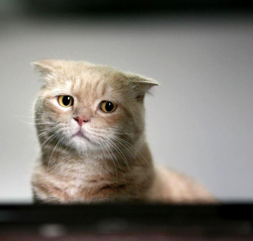 Как распознать депрессию у своего кота: признаки и помощь