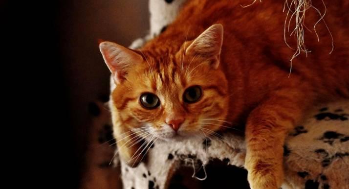 Талантливые пушистики: самые запоминающиеся роли котов