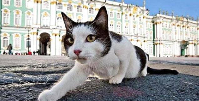 Эрмитажные коты: на страже мировых произведений искусства