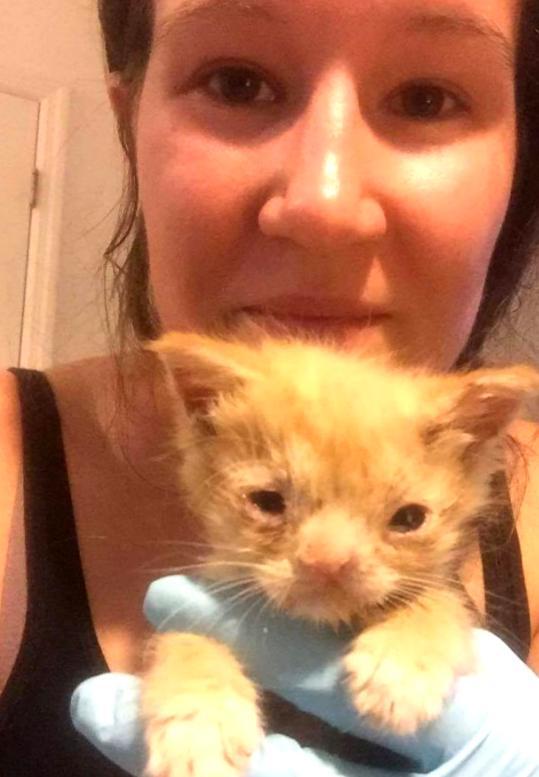 Кошка с расплющенной мордой: как Смуш завоевывает популярность