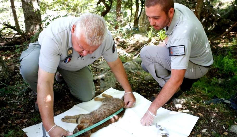 Кошка-лиса: ученые обнаружили новый вид животных?