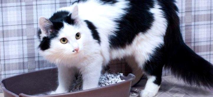 Ох уж эти странные кошки или 8 необычных привычек хвостатых