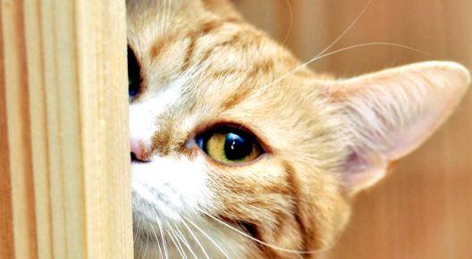 Кошка в опасности: откуда извлекают пушистых авантюристов