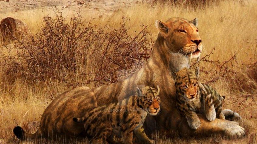 Доисторические кошки: свирепый оскал из прошлого