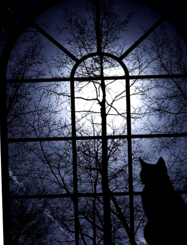 Покой нам только снится: как угомонить беспокойного кота в ночи