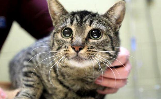 Не в своем уме: подвержены ли кошки психическим заболеваниям?