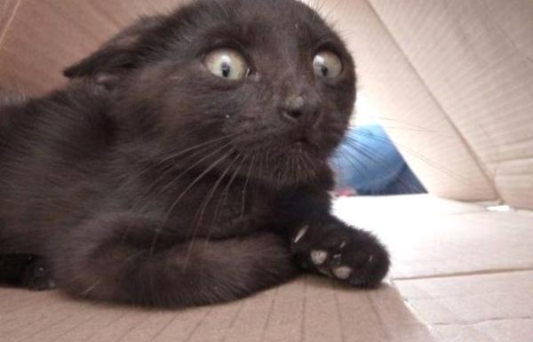 Страсти-мордасти: чего боится ваша кошка?