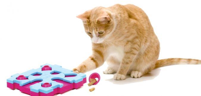 Маразм крепчал или кошки тоже подвержены болезни Альцгеймера