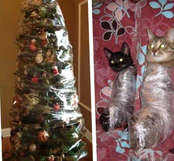 Вредные советы: как уберечь новогоднюю ёлку от кота