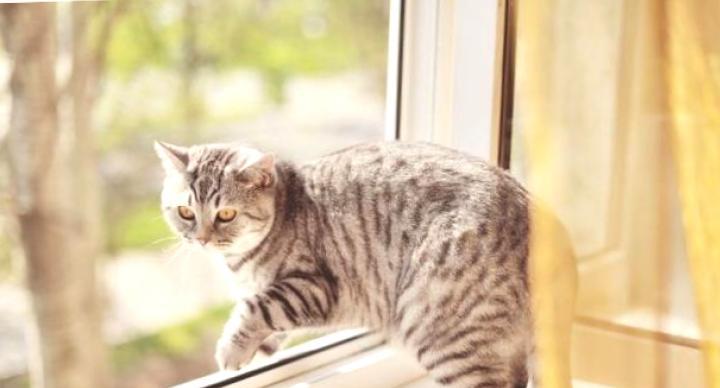 Кошки-самоубийцы: как животные сводят счеты с жизнью