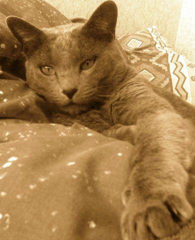 История из жизни: как в нашей семье появился кот