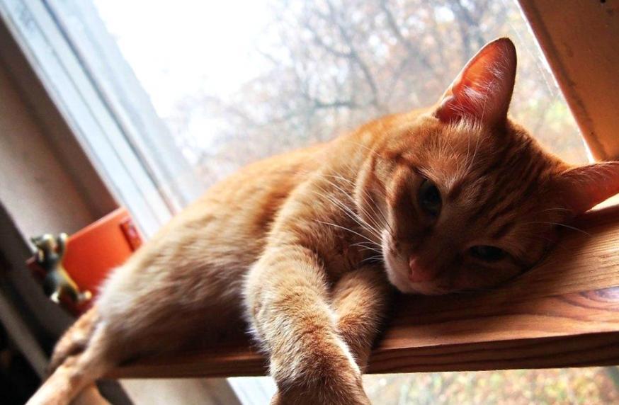Один день глазами кота или по соседству с человеком Часть 1