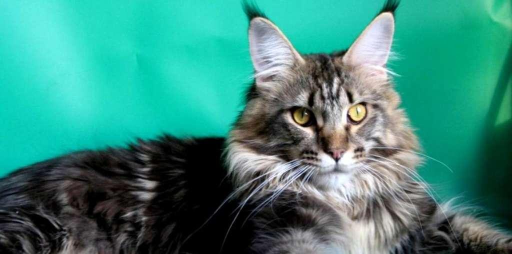 Котики против старости любимого хозяина: гладьте котэ и не старейте!