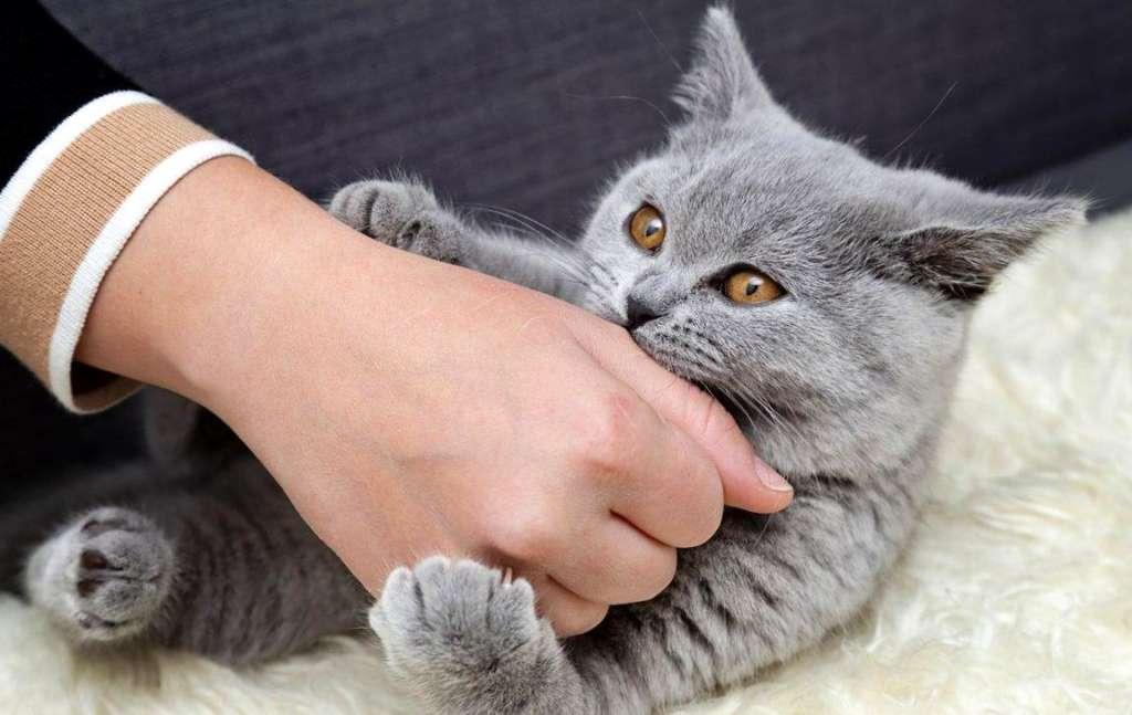 Кошки и зарядка: почему это так важно?