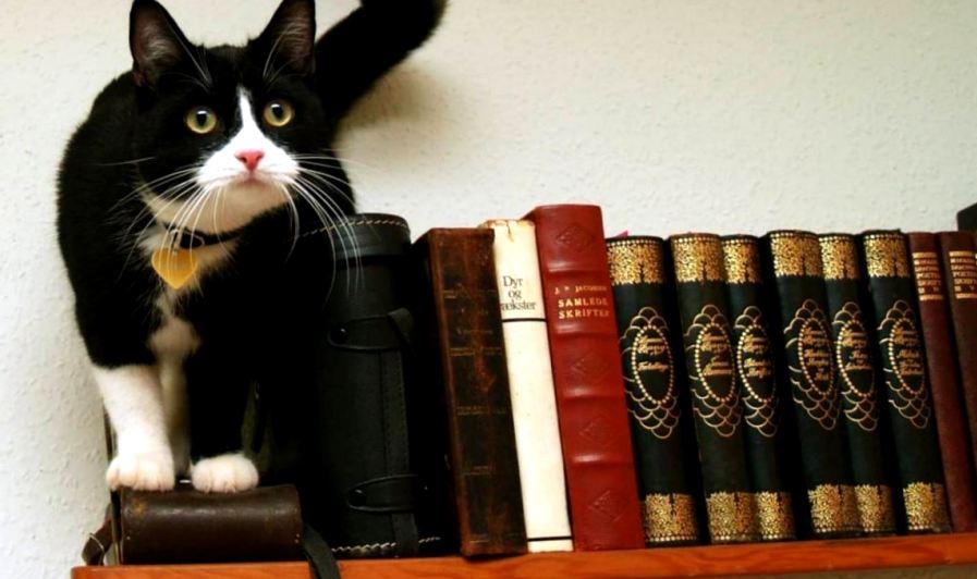 А чем занимаются ваши коты, оставаясь дома в одиночестве?