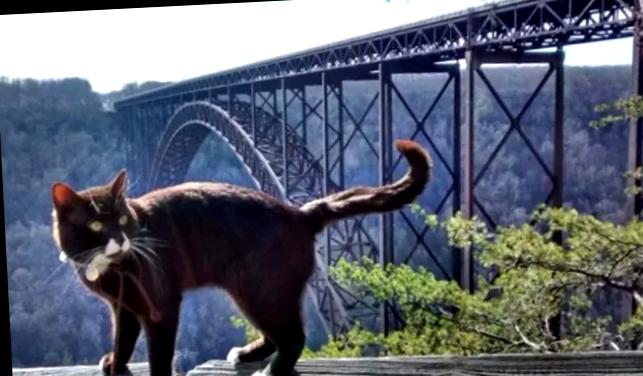Картинки по запросу кот Бурма путешественник