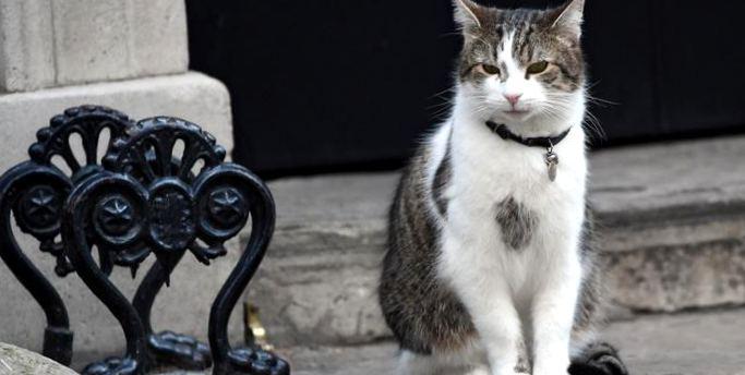 Картинки по запросу кот Ларри