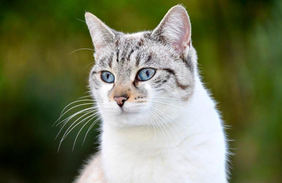 Картинки по запросу кот Аллей