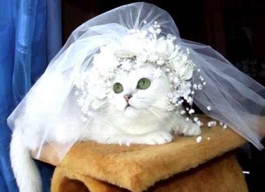 #свадьба #свадебноефото #фата #кошка #питомцы #яневеста #планированиесвадьбы #wedding #veil #cat #weddingcat #iamthebride