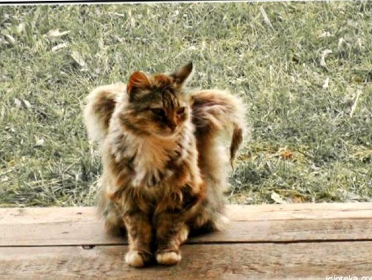 Пушистые ангелы среди нас: феномен котиков с «крыльями»