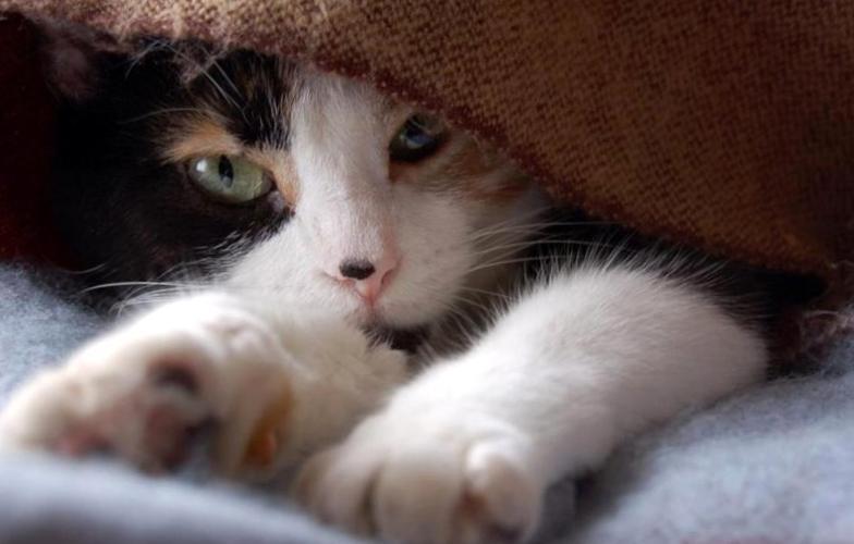 Картинки по запросу «Молочный шаг»: зачем кошка мнет одеяло и ваши колени