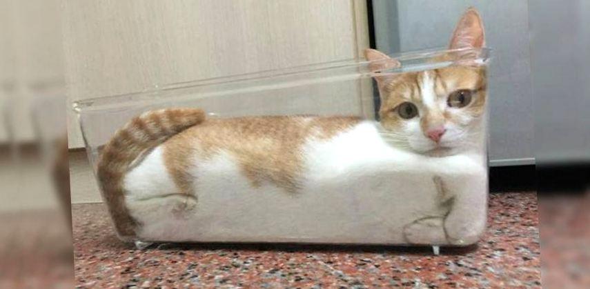 Картинки по запросу Жидкие коты и Шнобелевская премия