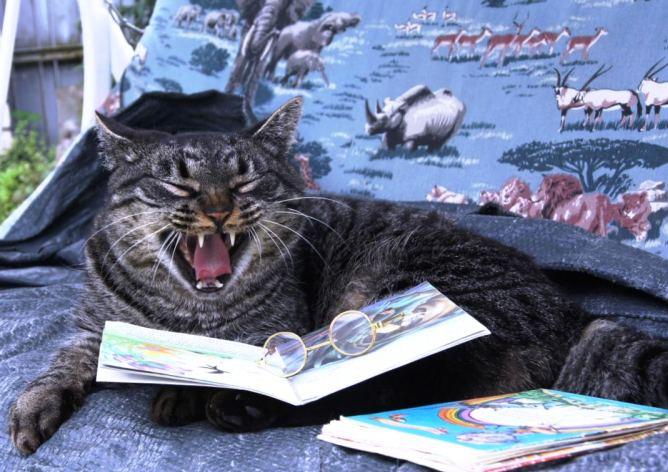 Самые знаменитые коты – библиотекари: немного интересного о жизни кошек в библиотеке