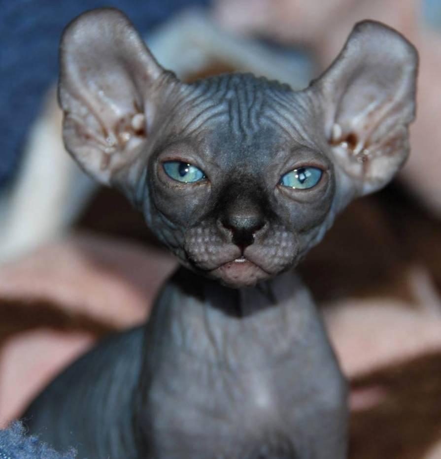 Картинки по запросу Эльф кошка
