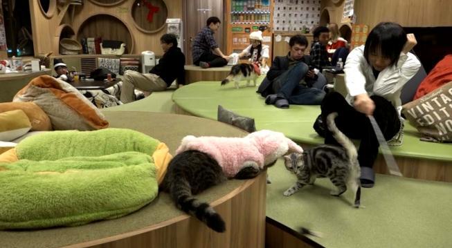 Коты, кофе и релакс: немного о заведениях с кошками