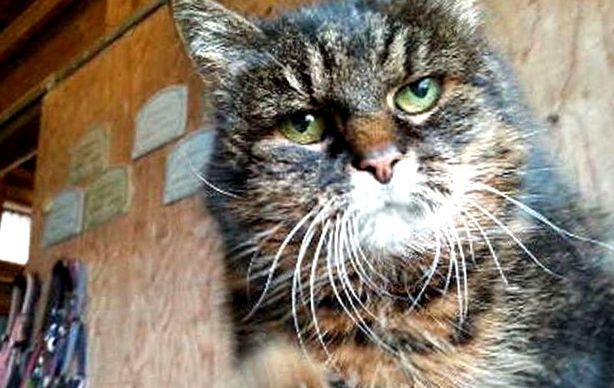 Картинки по запросу Каталина кот проживающая в Мельбурне, в Австралии