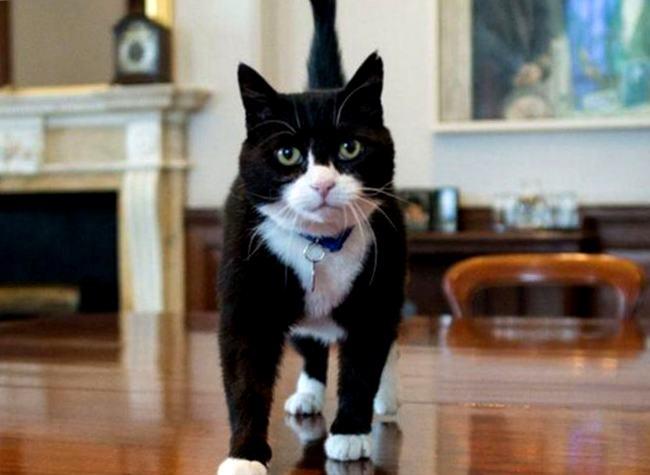 Картинки по запросу кот Палмерстон