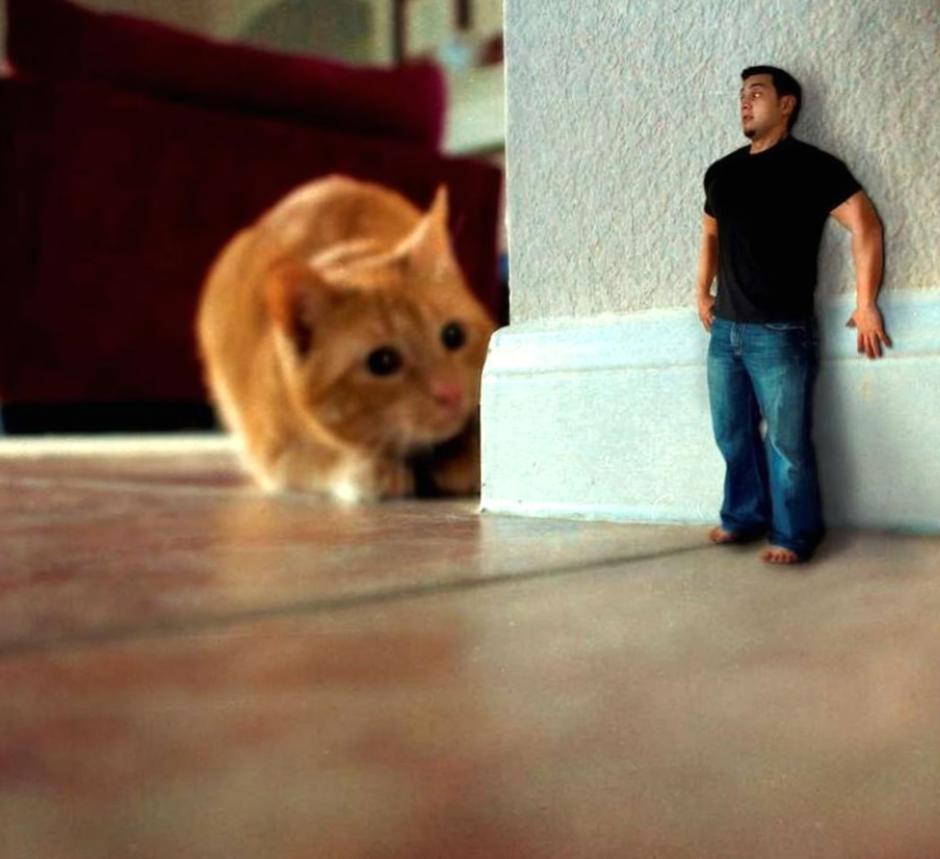 Айлурофобия или патологическая боязнь кошек