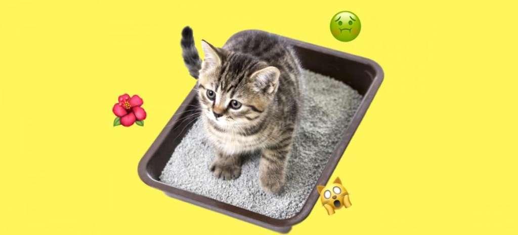 Картинки по запросу Кошачья моча: 7 простых советов для борьбы с неприятным запахом