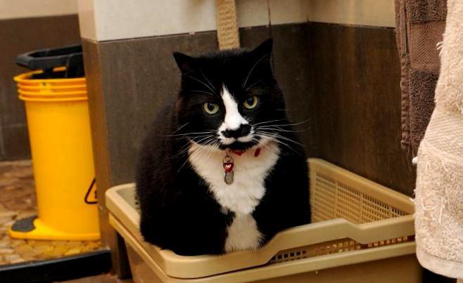 """Картинки по запросу """"Зачем мыть кошачий лоток"""""""""""