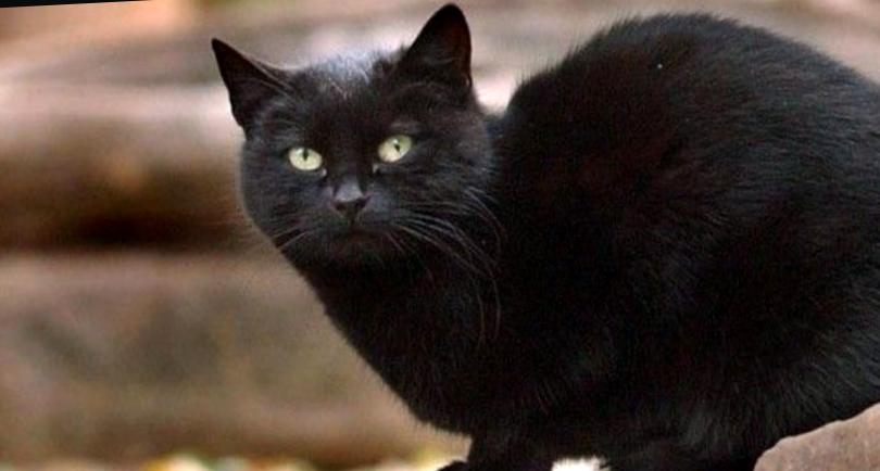 Кошки Гиннеса: самые толстенькие, пушистые и прочие удивительные котики