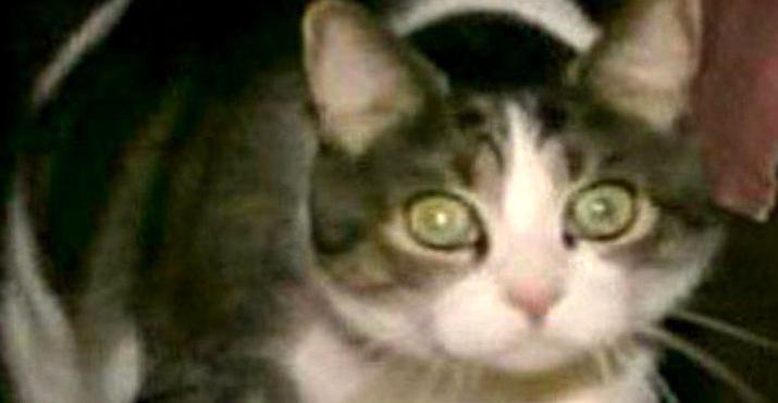 Картинки по запросу котик Сэл, член суда присяжных