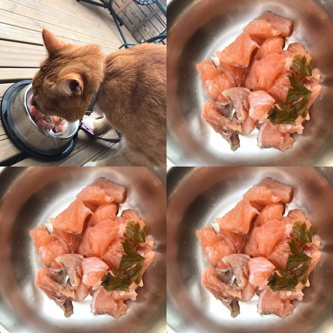 Почему Кот Немного Похудел. Что делать, если кошка худеет на глазах?