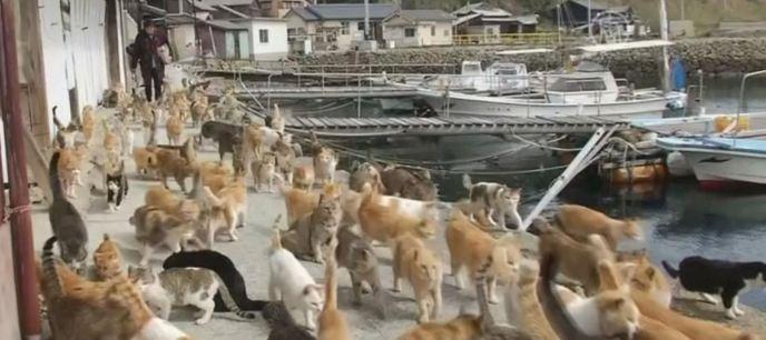 Кошачьи острова: рай для друзей наших пушистых